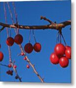 Ornamental Crabapple Branch Metal Print