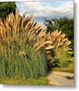 Ornamental White Pampas Grass-1 Metal Print