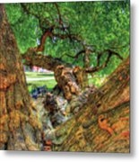 Osage Orange Metal Print