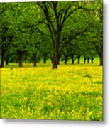 Osceola Landscape Metal Print