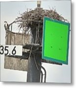 Osprey At Its Nest In A Navigation Marker Metal Print