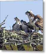 Osprey Family Portrait No. 2 Metal Print