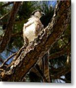 Osprey Hunting Metal Print
