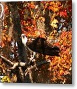 Osprey In Fall Metal Print