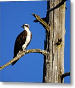 Osprey Nest Guard - 001 Metal Print