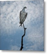 Osprey On Top Of The World Metal Print