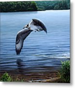 Osprey Over Clear Lake Metal Print