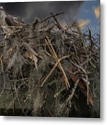 Osprey Protecting The Nest Metal Print