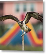 Osprey Salutes The Busch Eagle Metal Print