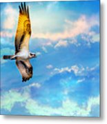 Osprey Soaring High Against A Beautiful Sky Metal Print