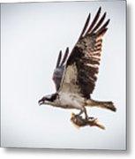 Osprey With Fish 8138 Metal Print