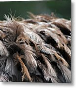 Ostrich Feathers Metal Print