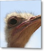 Ostrich Head Close Up Metal Print