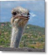 Ostrich Head Metal Print