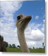 Ostrich High In The Sky Metal Print