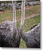 Ostrich Twins 2 Metal Print