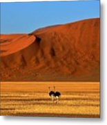 Ostriches At Sossusvlei Metal Print