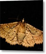 Other Side Of The Moth On The Window Metal Print