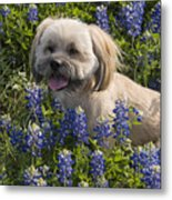 Our Bud In The Bonnets Metal Print