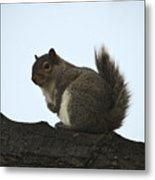 Our Squirrel Chubby Metal Print