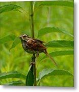 Out For Lunch Metal Print