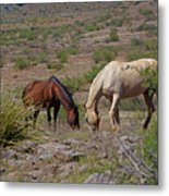 Out In The Open Range Metal Print