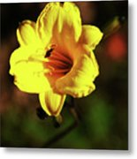 Out Of Darkness Into Light Metal Print