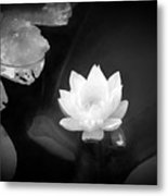 Out Of The Depths Bw Metal Print