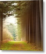 Out Of Woods Metal Print