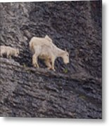 Out On A Ledge Metal Print
