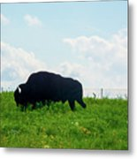 Out On The Range Metal Print
