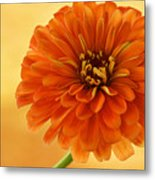Outrageous Orange Metal Print by Sandy Keeton