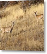 Outstanding In Their Field Metal Print