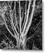Outstretched Metal Print