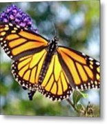 Outstretched Monarch Metal Print