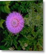 Over A Thistle Metal Print