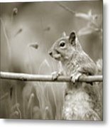 Over The Fence In Black And White Metal Print
