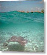 Over-under Water Of A Stingray At Bora Bora Metal Print
