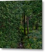 Overgrown Brook Metal Print