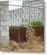 Overgrown Rusted Gate Metal Print