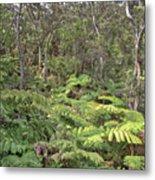 Overlooking The Rainforest Metal Print