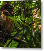 Owl-1 Metal Print