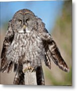 Owl 4 Metal Print