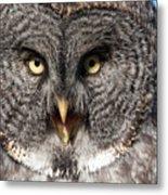 Owl 6 Metal Print