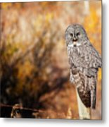 Owl 9 Metal Print
