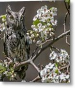 Owl Among The Blossoms Metal Print