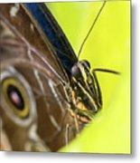 Owl Butterfly In Yellow Flower Metal Print