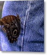 Owl Butterfly On Jeans Metal Print