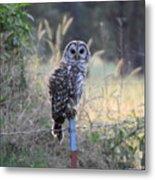Owl Cherish This Moment Forever Metal Print