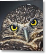 Owl Face To Face Metal Print